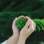 Baumtheologie - die Hoffnung ist grün